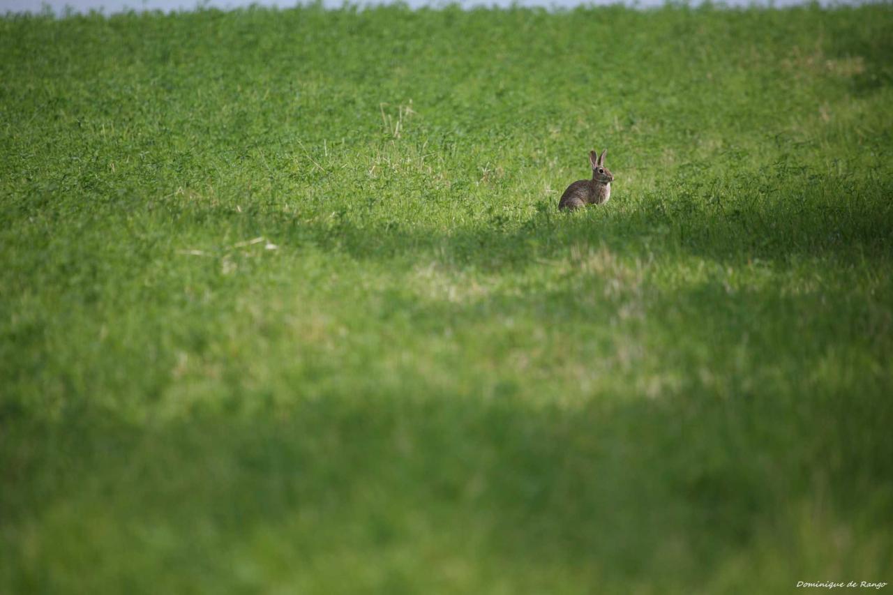 Le lapin du Groin